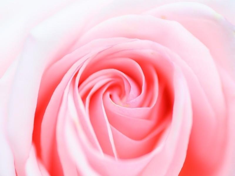 📷マクロレンズ習熟講座❗季節の花やアクセサリをマクロで撮ろうの画像