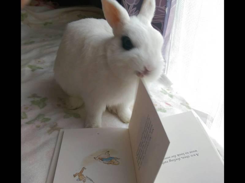 英語Peter Rabbit 読書と動画も観ながらTea会の画像