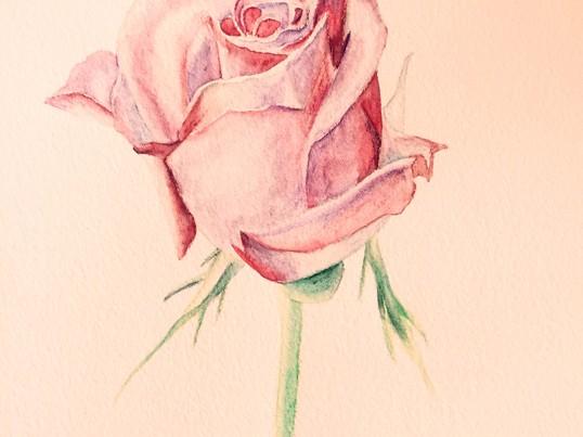 水彩色鉛筆の描き方の画像
