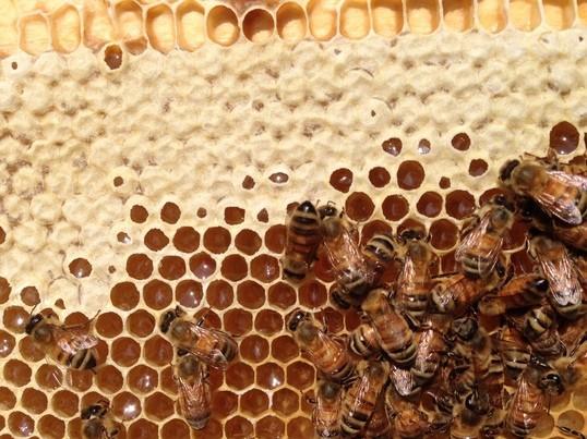 夏休みの自由研究にもなる、蜜蝋を使ったアロマワックスバー作り!🐝の画像