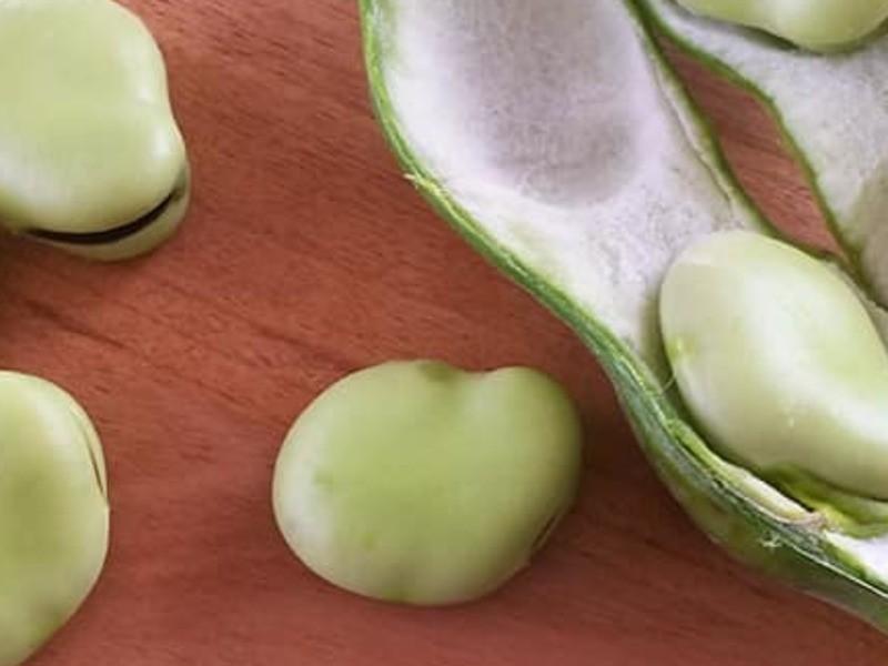 発酵食!豆板醤作りとハーブ自然治癒食!ダンディライオン豆乳担々麺の画像