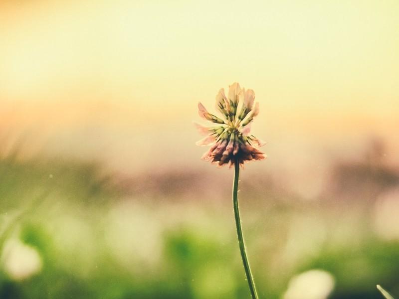 マインドフルネス瞑想体験会 忙しい日常から離れて脳を休めましょう!の画像