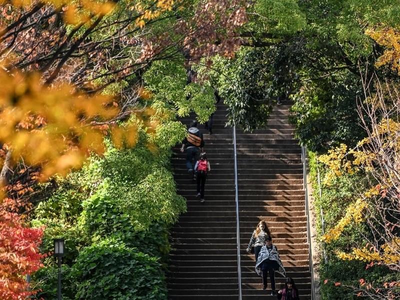 📷紅葉で楽しくお散歩スナップ🍁【露出・レンズワークの振返り】の画像