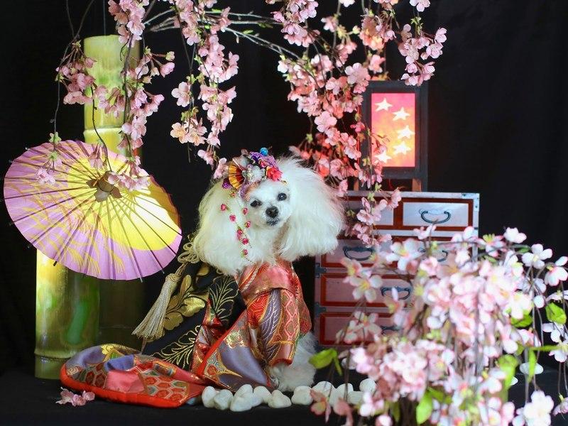 お年玉企画☆ワンちゃんが可愛く撮れるフォトブース撮影入門の画像
