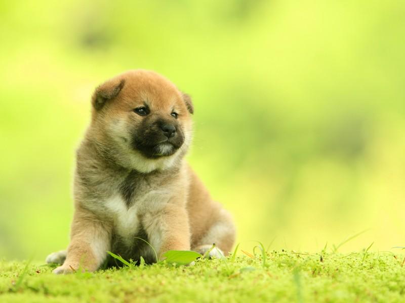 夜活!ペトグラファーが教える愛犬写真の撮り方教室の画像