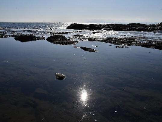 月に3回江ノ島の海岸で海風を感じながらITについて学びませんか?の画像