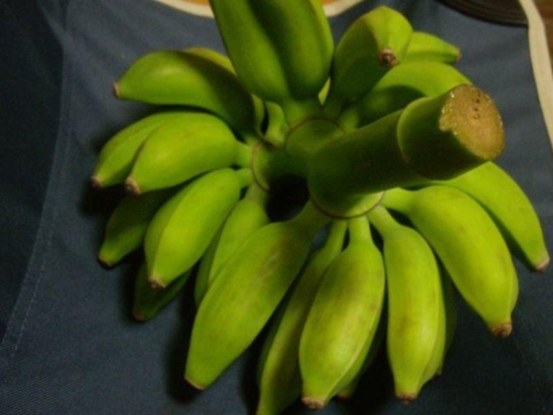 【導入編】あなたも自宅でバナナが収穫できる(めずらしバナナ試食付)の画像