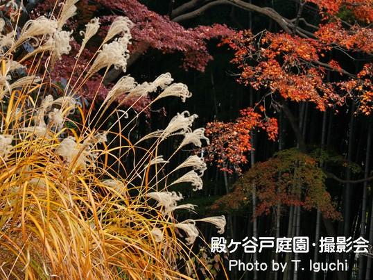 《紅葉と晩秋を楽しむ》~殿ヶ谷戸庭園・撮影会~の画像
