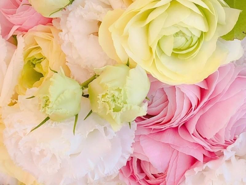オンライン☆国際イメージコンサルタントのカラー講座!色で魅力アップの画像