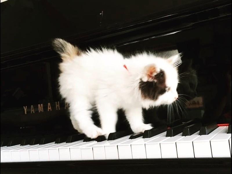 【50 代限定】間違えてもいいストレスフリーなピアノレッスンの画像