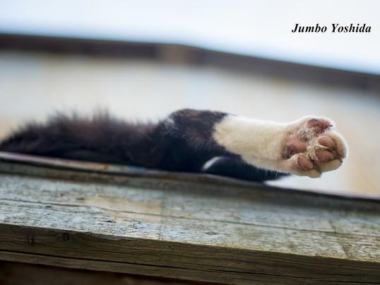 猫中心スナップ写真講座 江の島の画像