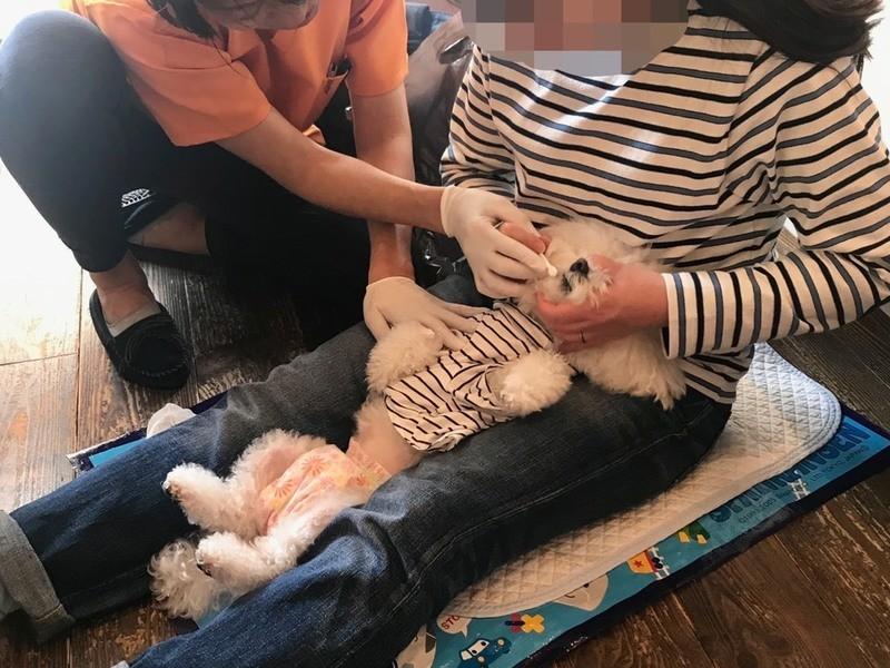 【オンライン講座】愛犬の楽しくなる歯磨き。ワンコインdeレッスン。の画像