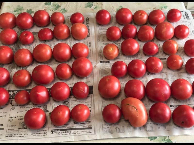 [中級] 無農薬でオーガニックな自然農法をマスターしようの画像