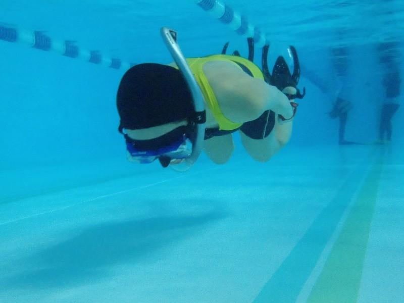 【2回目以降】ドルフィンスイム/スキンダイビング講習(通常プール)の画像