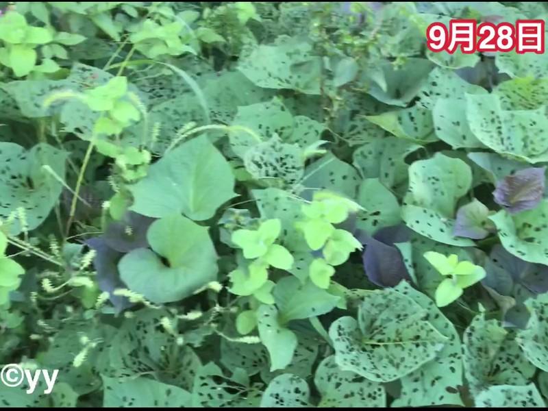 [初級] シニアのための菜園技術の画像