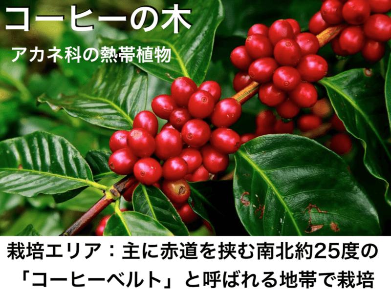【基礎から学べる!】初心者にやさしいコーヒー講座☆オンラインの画像