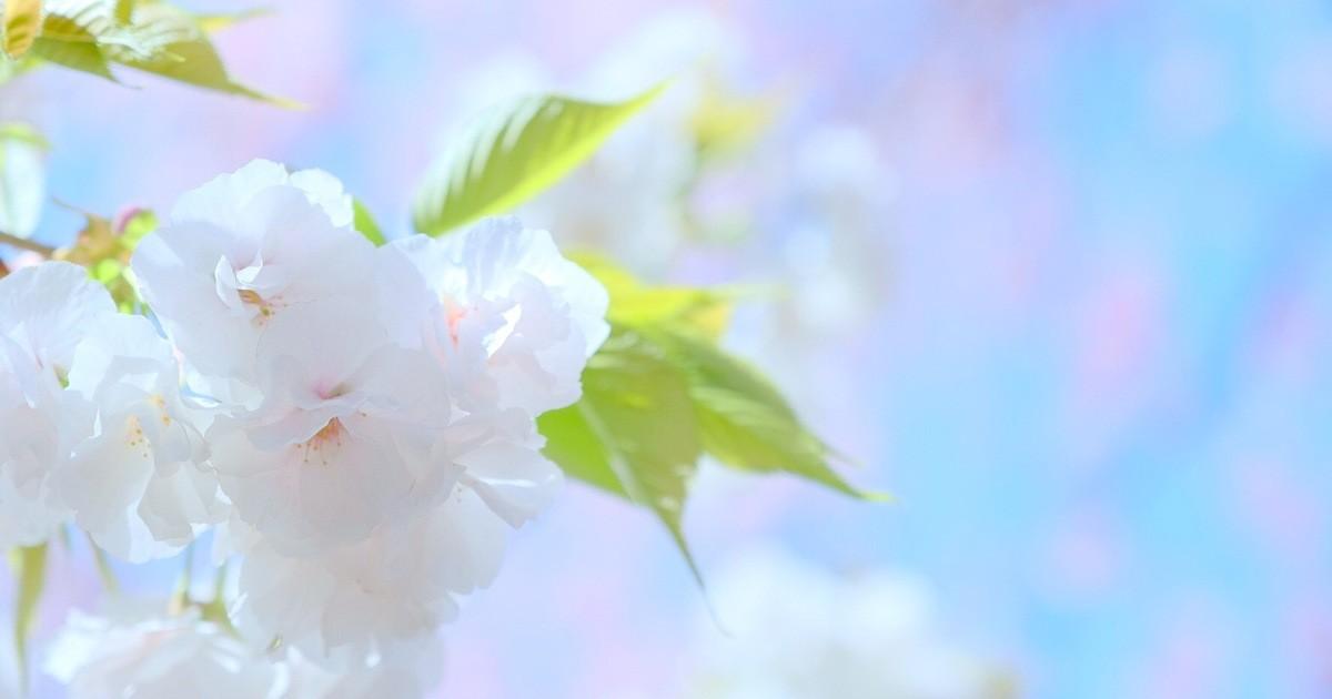 重永 浩子の教室ページの見出し画像