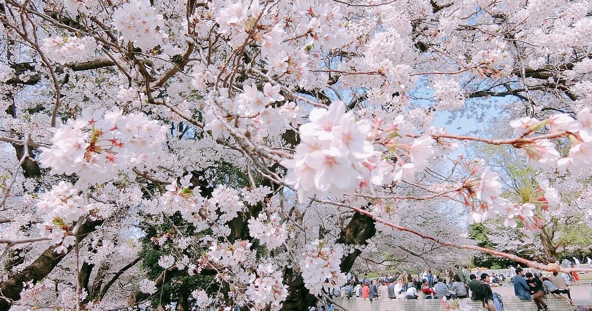 Minami  Marikoの教室ページの見出し画像