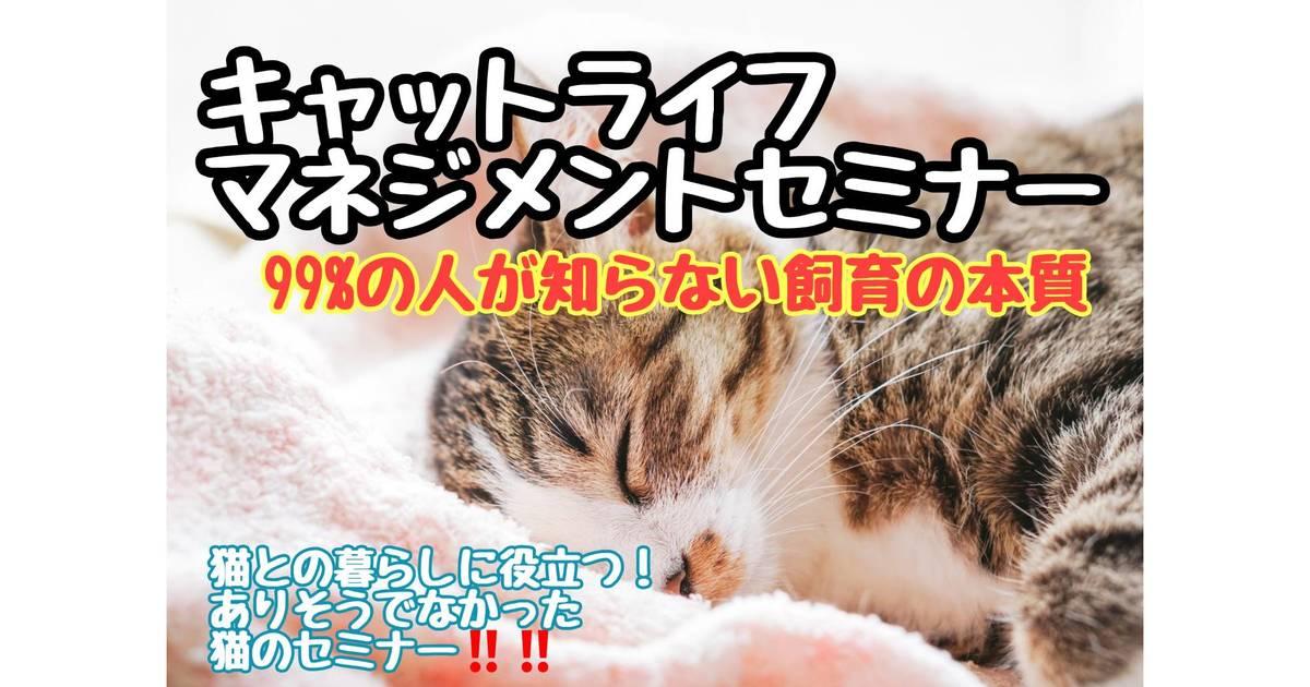 干川 伊代菜の教室ページの見出し画像