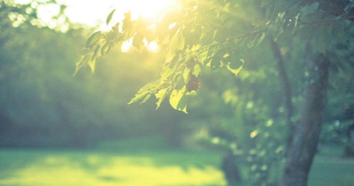 大野 美樹の教室ページの見出し画像