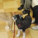 犬のイベント・セミナーのcloverの講座の風景