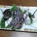 魚のさばき方教室の講座の風景