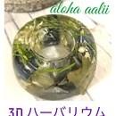 alohaaalii(アロハアアリイ)の講座の風景