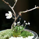 Natural botanical designの講座の風景