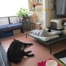犬との暮らしのマインドセット☆しつけに悩むその前にの講座の風景