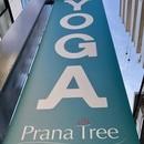 Prana Tree Yoga Studioの講座の風景