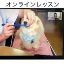 【ワンランク上のおうちケアをあなたの愛犬に】の講座の風景