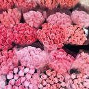 rosy tokyo バラとハーブの暮らしレッスンの講座の風景