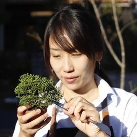 ミニ盆栽家  進藤 公子のプロフィール写真