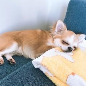 shiraishi asakoのプロフィール写真